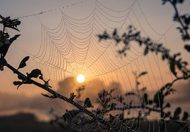 5 Ways to Clear Out the Cobwebs
